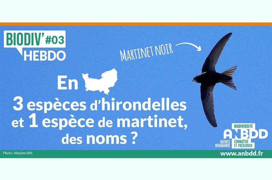 Biodiv'Hebdo