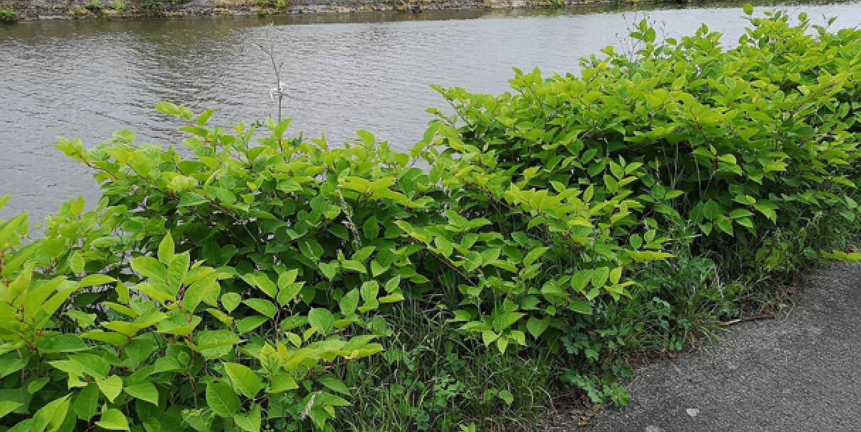 Traitement des déchets verts issus des actions de lutte des plantes exotiques envahissantes