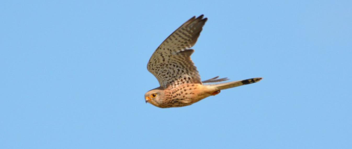 Atlas des oiseaux de Normandie