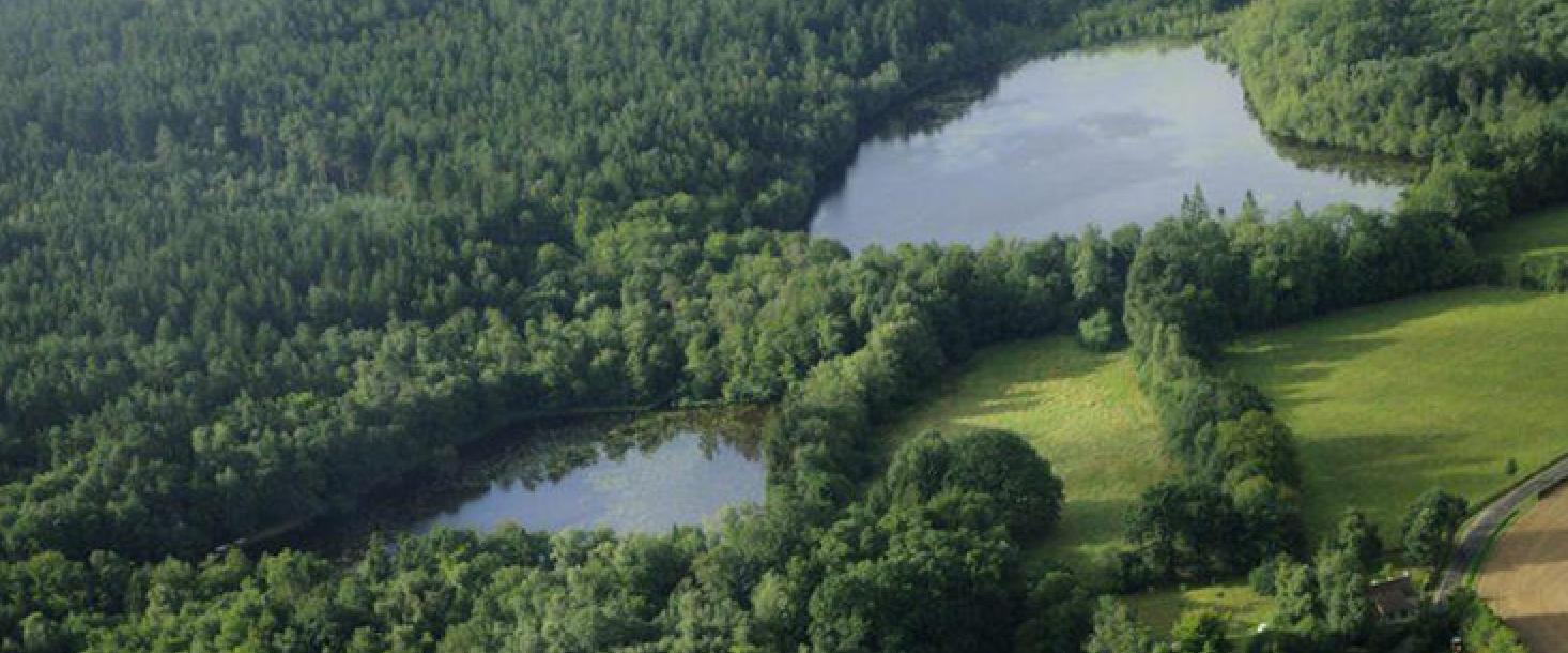 Restauration du pavillon de l'étoile dans la forêt domaniale de Perche-Trappe (61)