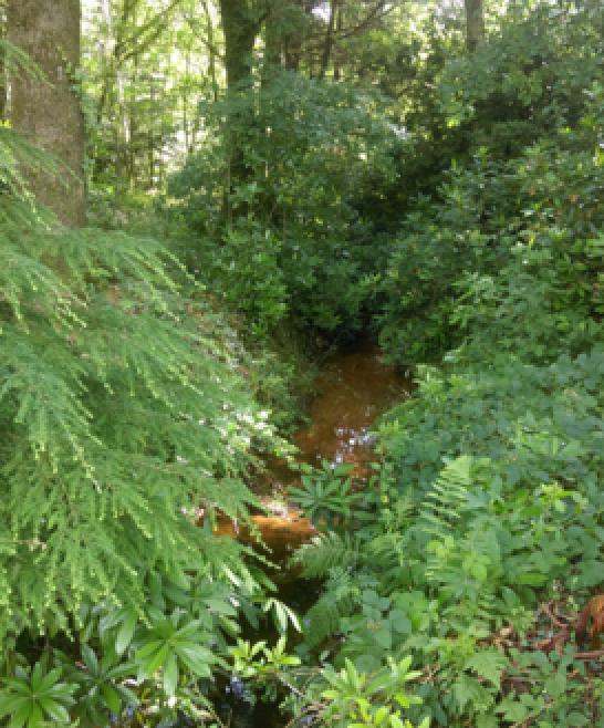 Le ruisseau des Essarts