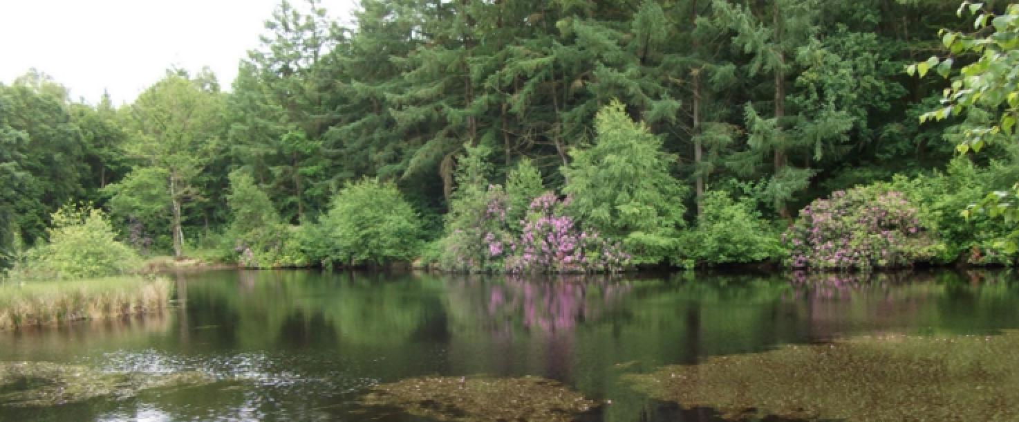 Réhabilitation du ruisseau des Essarts dans la forêt domaniale de Saint-Evroult (61)