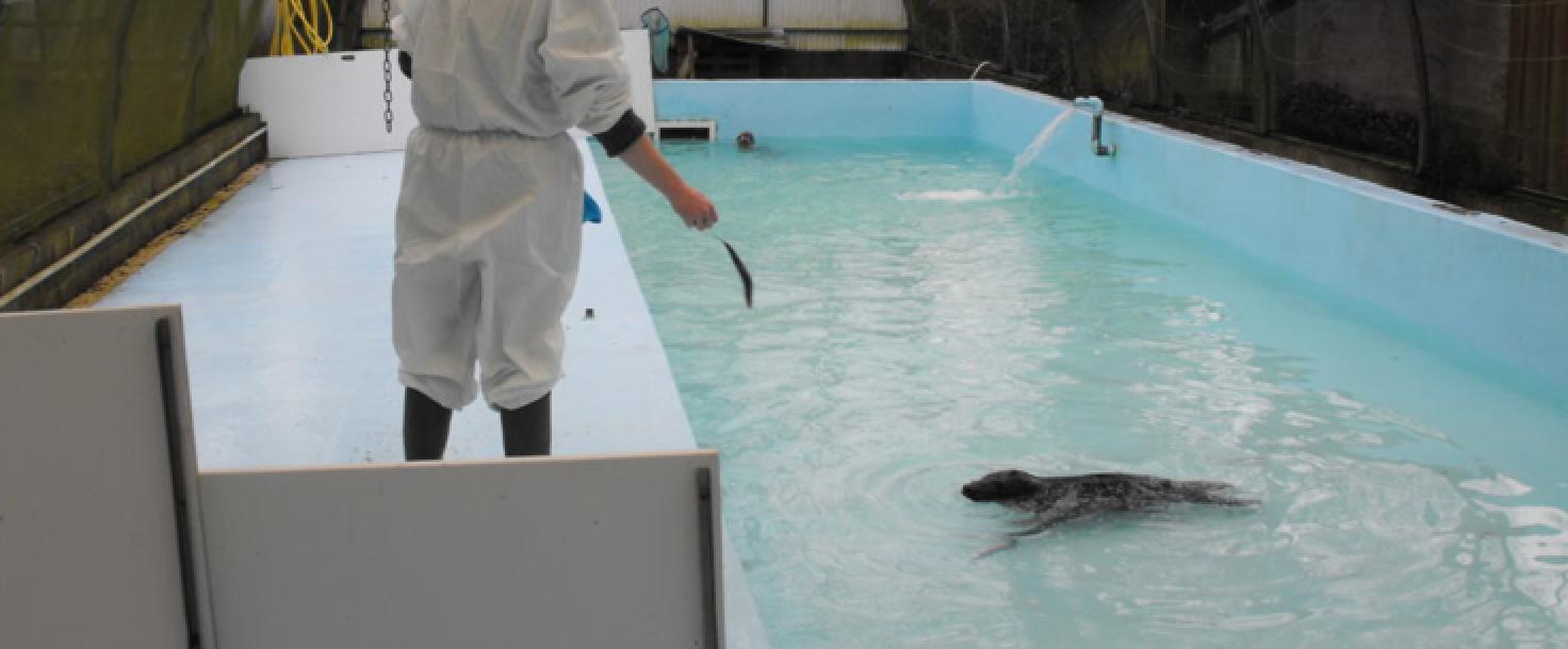 Réfection de la piscine carré du centre de sauvegarde des animaux sauvages (76)