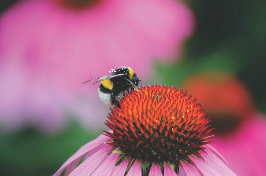 [Séminaire technique en ligne] Les pollinisateurs, de la connaissance à la gestion