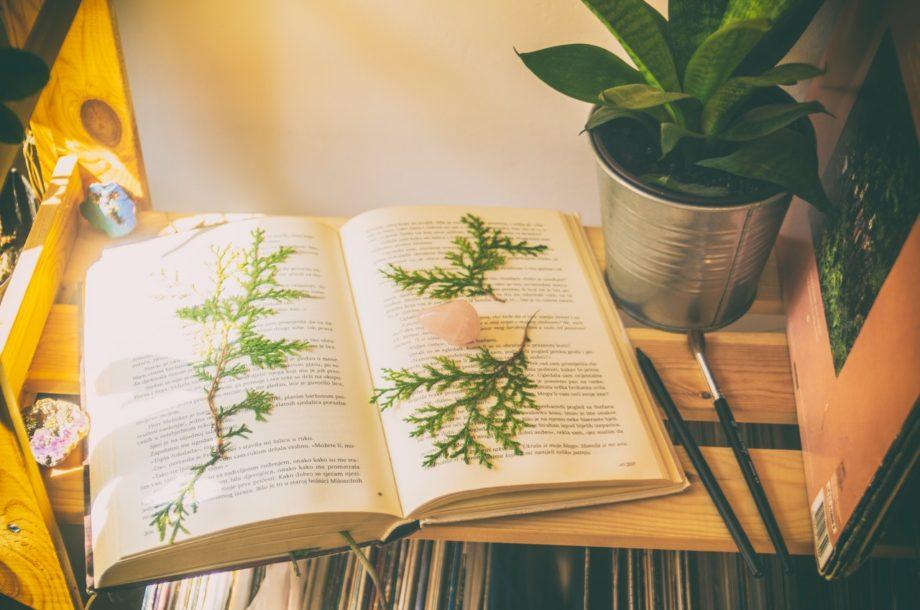 [En ligne] Réunion de présentation du projet Devenir conseillers en éducation à la nature en Normandie