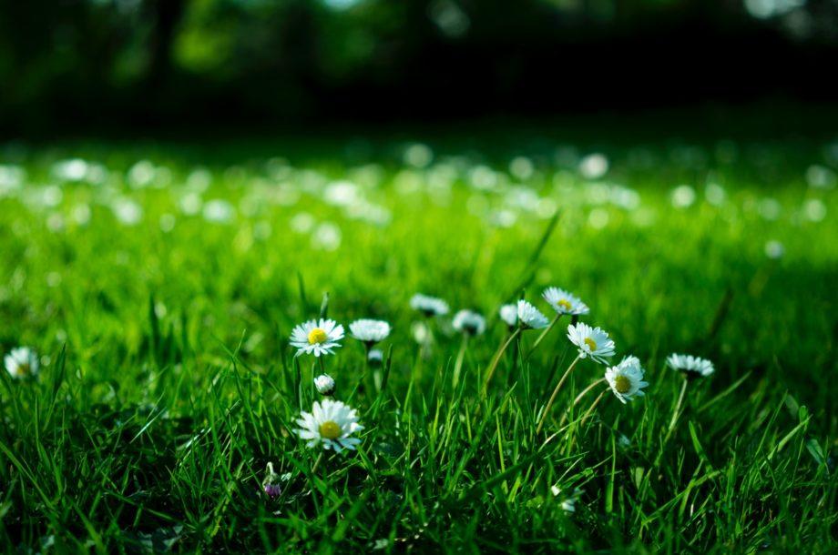 [Webinaire CNFPT] La végétation des cours d'école #Les Flash infos de la biodiversité