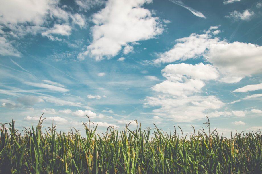 [Appel à projets] L'agriculture s'adapte au changement climatique