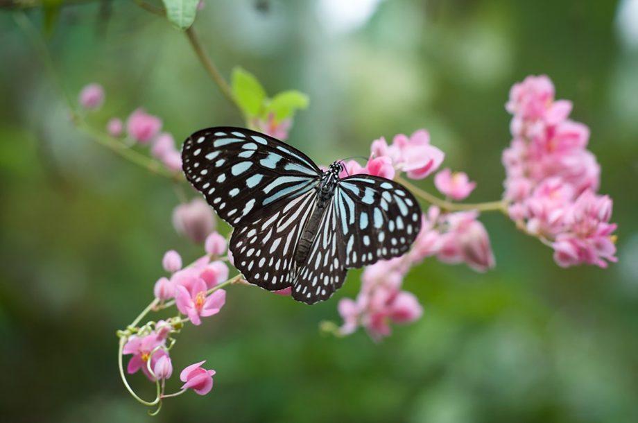 [Webinaire] Séminaire national du Plan national d'actions « Papillons de jour»