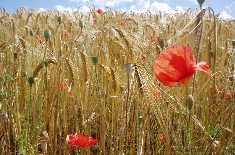 L'ANBDD lance un marché lié à la connaissance sur la Biodiversité régionale