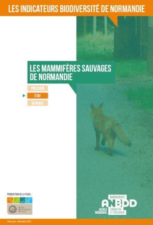 Les mammifères sauvages de Normandie