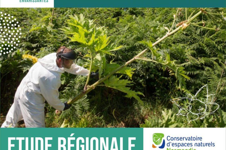 Le CEN Normandie lance une étude régionale sur les gisements de déchets des plantes exotiques envahissantes en Normandie