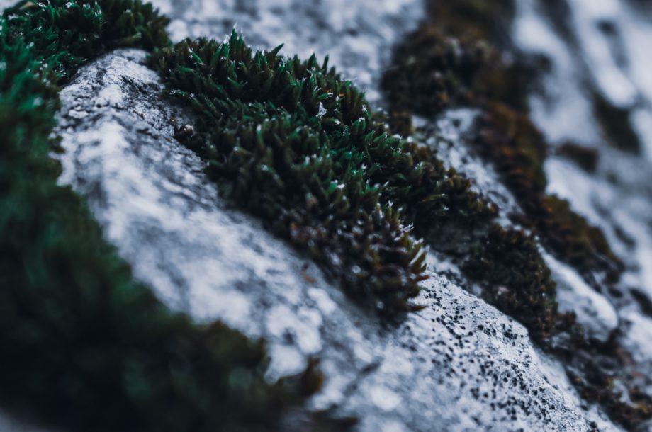 [Visio-conférence] Impacts du changement climatique sur la biosphère