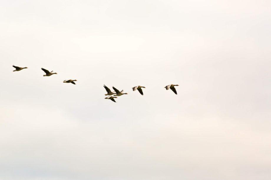 [Webinaire et Ateliers en ligne] Rencontres Suivi des Oiseaux Communs 2021