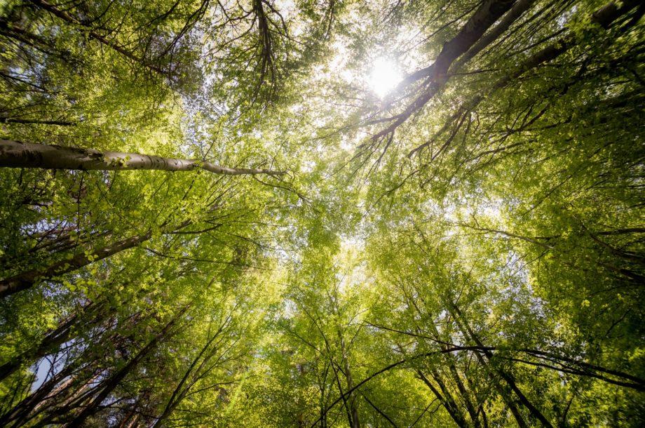 [Appel à projets] Lancement des seconds appels à projets de 2021 FEADER  Soutien à l'agroforesterie intraparcellaire sur la période de transition 2021-2022
