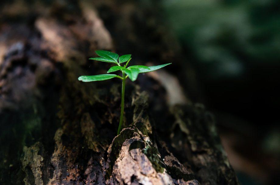 [Webinaire CNFPT] Connaissance de l'arbre et de ses besoins – Cycle l'Arbre en ville #2