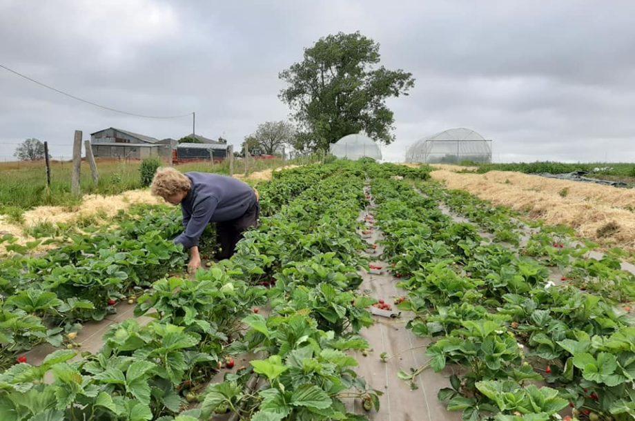 Les Champs de Bray, au cœur d'une transition agroécologique et sociétale – 76