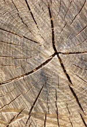 [Fiche-ressources] L'arbre en ville