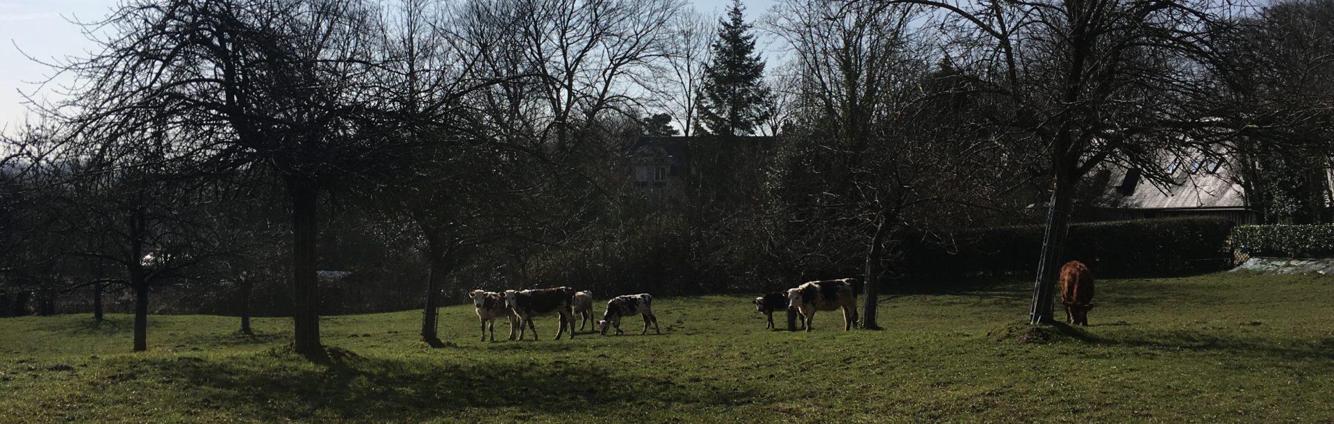 L'autonomie alimentaire en élevage : le choix d'un système pâturant et performant alliant qualité de vie et qualité des produits – 76