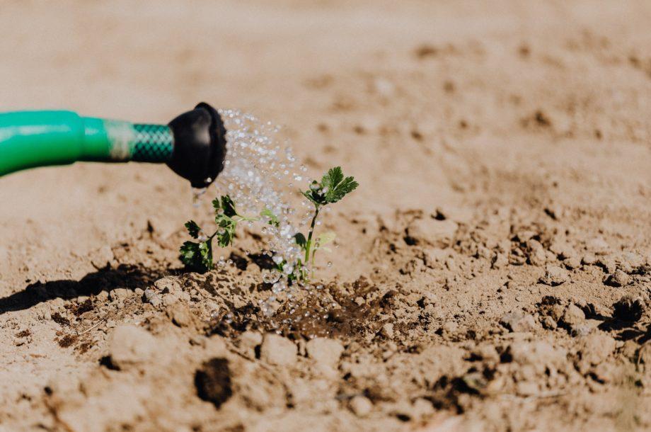 [Webinaire] Le dérèglement climatique : un défi pour les plantes #4/5 Que nous dit la nature ? (2)