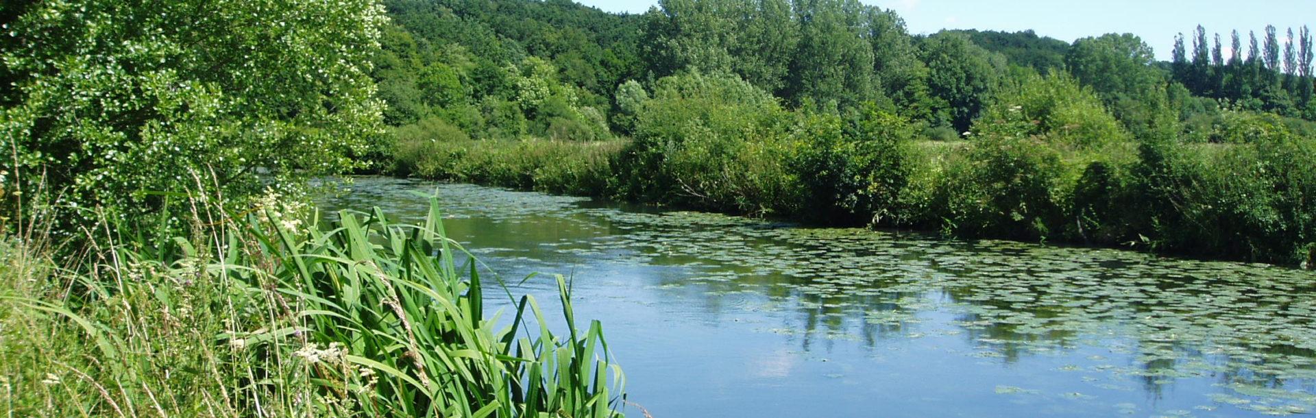 État écologique des masses d'eau de surface