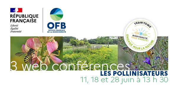 [Webinaire] Préserver les pollinisateurs dans nos territoires, retours d'expérience des TEN – Cycle webinaires OFB Pollinisateurs #3