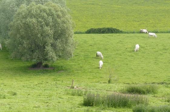 Les prairies, hauts lieux de la biodiversité