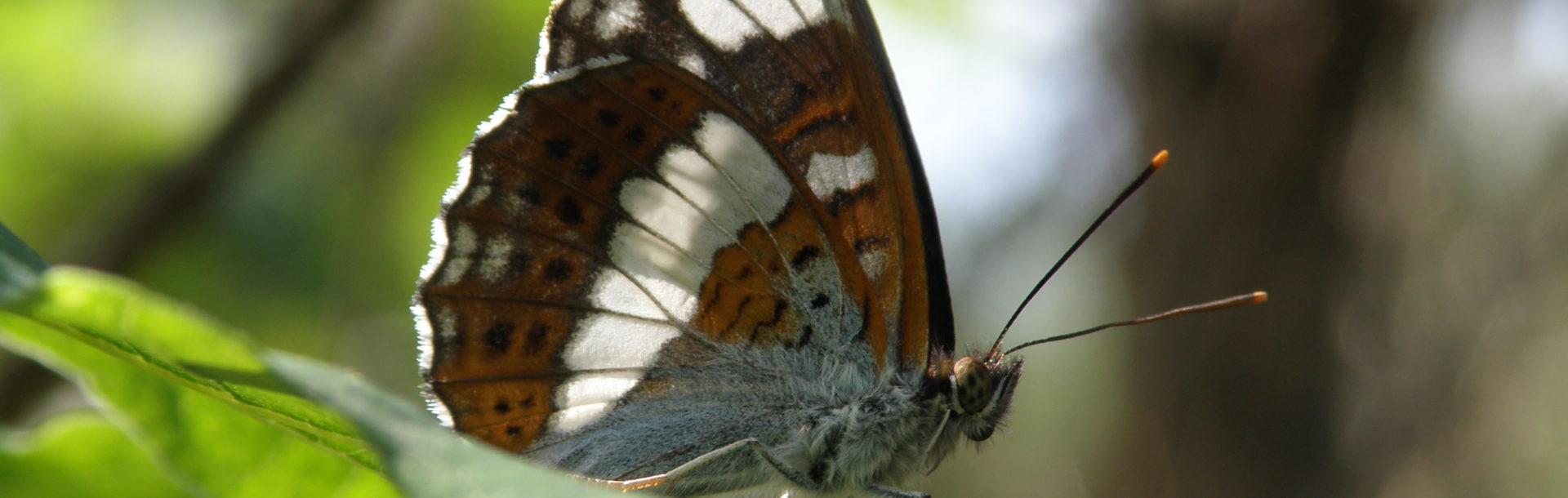 Les indicateurs normands de la biodiversité