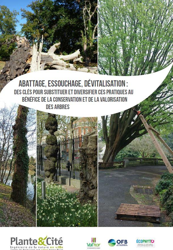 Abattage, essouchage, dévitalisation : des clés pour substituer et diversifier ces pratiques au bénéfice de la conservation et de la valorisation des arbres