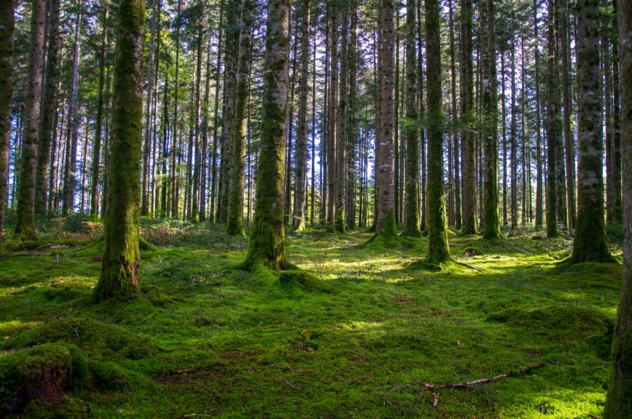 [Webinaire] Réconcilier paysage nocturne et biodiversité – Cycle Paysage & Biodiversité CFB #2